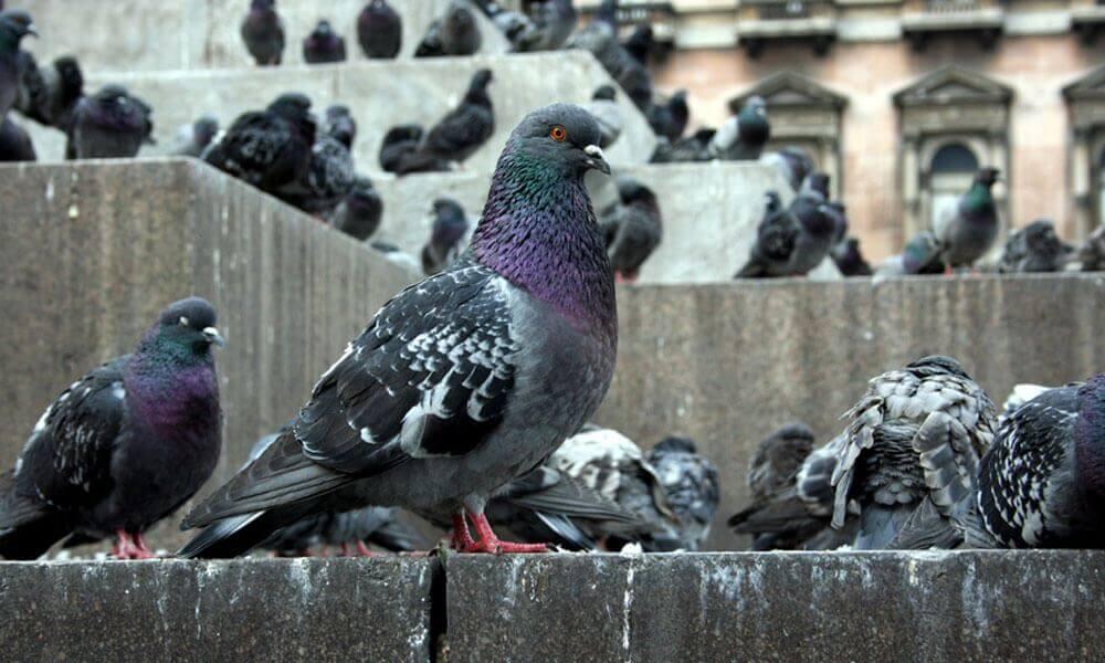Best ways to get rid of pest birds