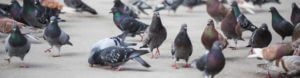 bird control cape town